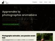 Aube Nature - Photographies animalières et de nature