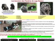 screenshot http://www.bouvier-des-flandres.com les bouviers des flandres de lage baston