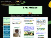 BPR Afirque, Projet Jatropha