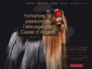 YORKSHIRE - Eleveur de Yorkshire terrier et vendeur de chiots Yorkshire - Le Castel d'Argent