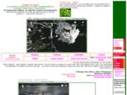 Cerisiers cerises photos variétés conseils forum