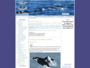 screenshot http://www.cetace.info baleines, dauphins, cachalots, orques et marsouins : l'info des cetaces