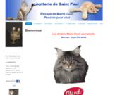 screenshot http://www.chatteriedesaintpaul.fr chatons maine coon