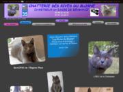 screenshot http://www.chatteriedesrivesdublosne.fr chatterie des rives du blosne