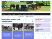 screenshot http://www.chevaux-de-sport-la-treille.fr chevaux de sport de la treille