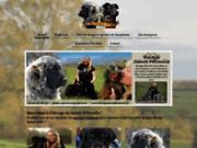 screenshot http://www.elevagesaintepetronille.fr élevage familial de berger de beauce