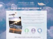 screenshot http://www.experiencebaiedesomme.com sortie nature guidée et agence d'événementiel en Baie de Somme