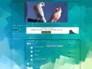 screenshot http://www.forum712.1fr1.net forum de téléchargement