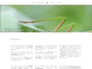 Insectes de France