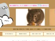 screenshot http://www.j1prim.com/ J1prim création de logos et impression en ligne
