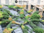 screenshot http://www.jardinsdebabylone.fr mur végétal luxe