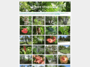 screenshot http://jardintropical.net/ jardin tropical
