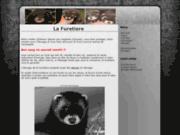 screenshot http://www.lafuretiere.fr/ 1 elevage de furet francais - furets domestiques