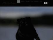 screenshot http://www.levaldelenchanteur.com elevage passion de carlin et bouvier bernois