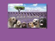 screenshot http://nblabradors.com élevage labradors