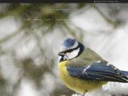 Oiseaux de France : Photographies HD d'oiseaux