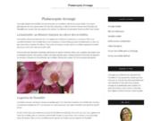 Guide sur l'arrosage d'une orchidée