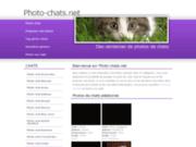 Photos chats