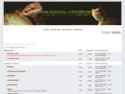 Le Pogona Vitticeps