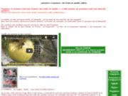 Pommiers et pommes conseils et informations