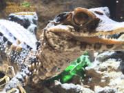 Reptiland une autre vision des reptiles