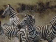 Tanzanie Voyages