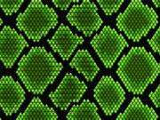 Achat insecte vivant pour nourriture reptile