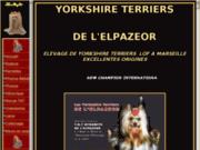 Les yorkshire terrier de l'Elpazeor : toys pour compagnie ou yorkshire pour expositions