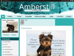 Amberstill yorkshire terrier