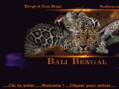 Consulter la fiche de Chats du Bengal