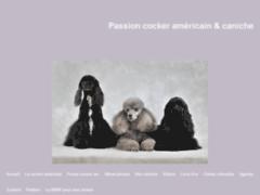Passion cocker américain