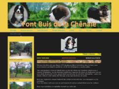 Elevage de chiens : bouvier bernois