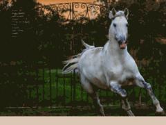Elevage du Real : chevaux lusitaniens - montfrin - gard
