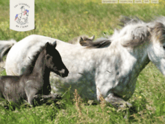 Les chevaux Islandais de l'Albe