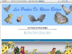 Les Poules De Races Belges