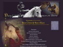 Liberty horses