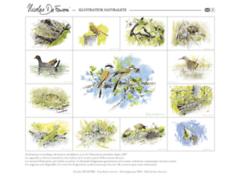 Illustrateur naturlaiste