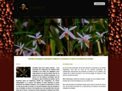 Orchidee91 le site des orchidees en essonne