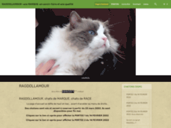 Ragdoll, un amour de chat