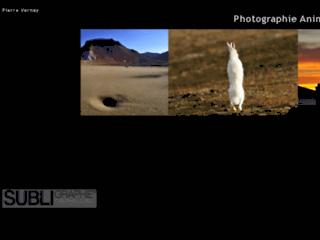 Aperçu de Photographie animalière et de nature