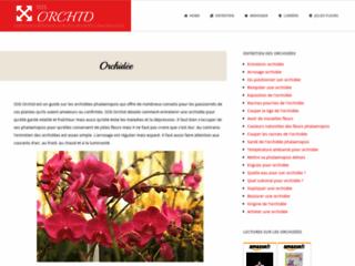 les-orchidees-phalaenopsis