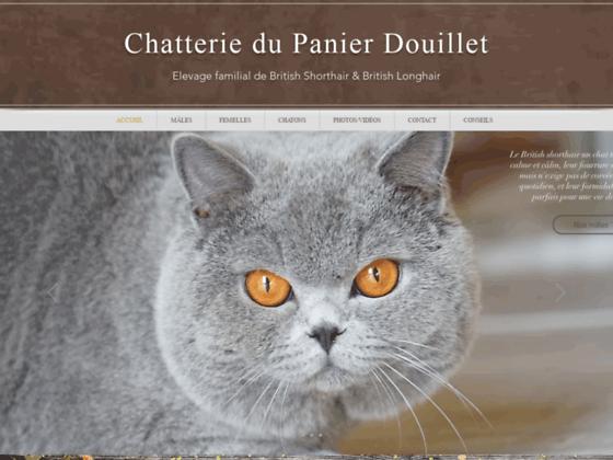 Détails : Elevage de chats British Shorthair