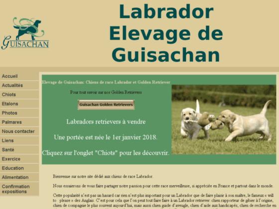 Détails : chenil de labradors de Guisachan, chiots labradors retrievers à caresser