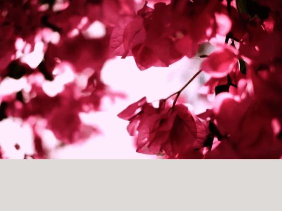 Veranda Resorts à l'île Maurice