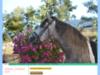 Eleveurs de chevaux lusitanien