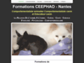 Voir la fiche détaillée : Formation de comportementaliste animalier, éducateur canin