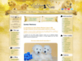 Golden Retrievers of Sim: vente et pension pour chiens