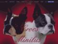 Voir la fiche détaillée : CROCS MINILUS Elevage de Boston Terrier en Bretagne