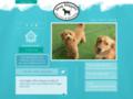 Dog Diggity Daycare & Boarding