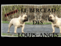 Screenshot de Elevage du Berceau des Loups-Anges par Robothumb.com
